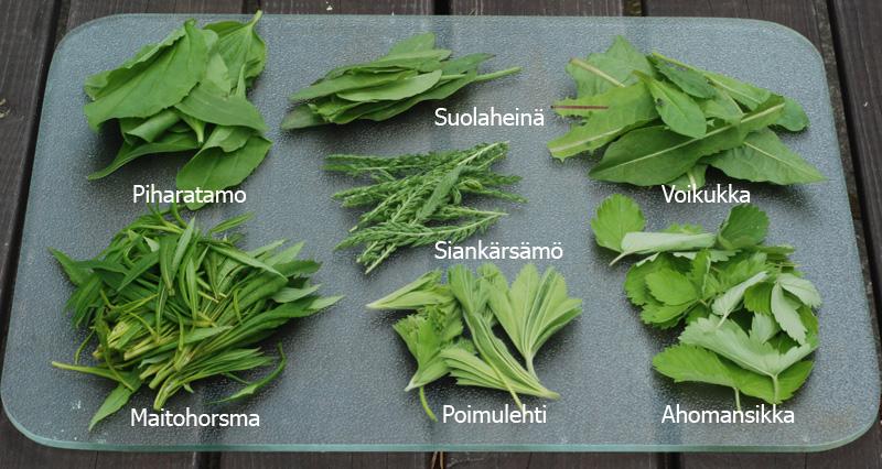 hortalajitelma marinadiin nimet