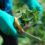 Villiinny villivihanneksista verkkokurssilla!