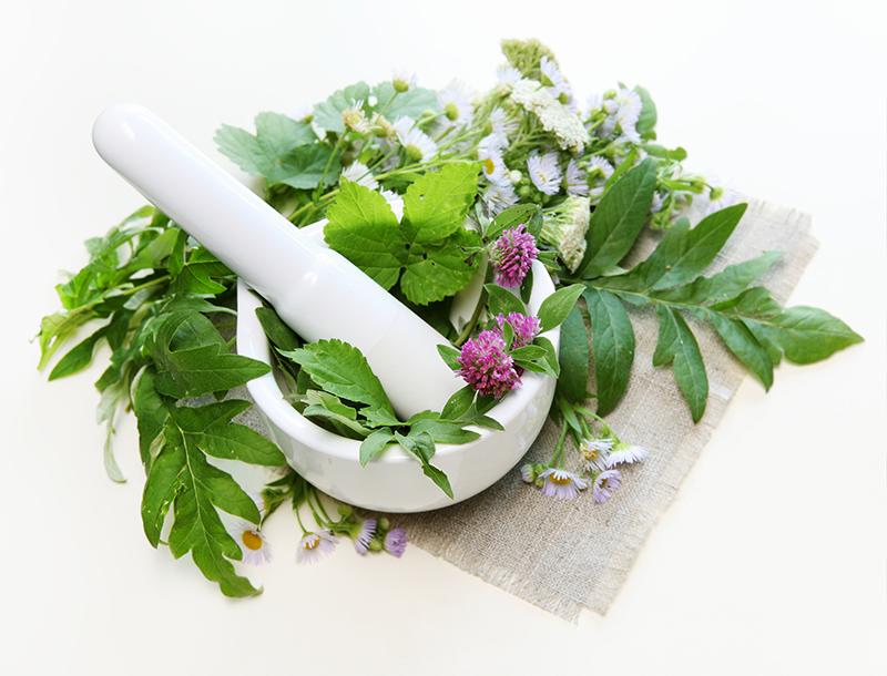 Kasvien ruoka- ja rohtokaytto