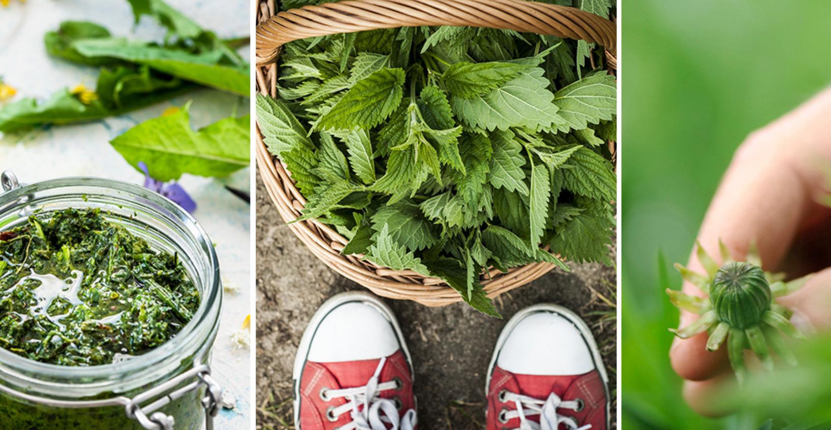 Villiinny villivihanneksiin -verkkokurssi